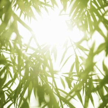 Zen og mindfulness